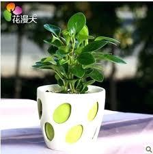Fragrant Potted Plants - desk plants for office desk as per vastu best plants for office