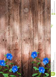 wood wall with blue flowers background stock photo