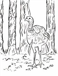 free printable thanksgiving coloring sheets kids and all ages free printable free turkey coloring sheet