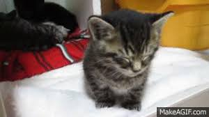 Sleepy Kitty Meme - sleepy kitten fights to stay awake cats vs cancer