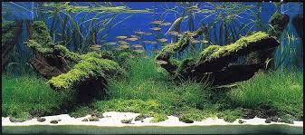 Aquascape Design Layout Layout Critique 2 Takehiko Honoki Aquascaping Aquatic Plant