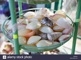where to buy seashells makarska riviera croatia 20 june 2017 buy seashells for