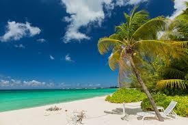 Palm Tree Wallpaper Wallpaper Grand Cayman Nature Sky Palms Tropics Coast Sunlounger