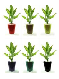 Buy House Plants Ceramic Pots Forts Online Buy Wholesale Garden From China Indoor