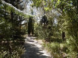 native plants of the sydney region hunter region botanic gardens heatherbrae nsw theme gardens