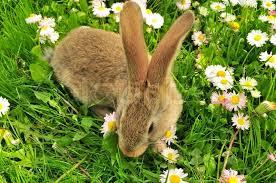 rabbit garden rabbit in the garden in summer stock photo colourbox