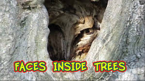 amazing faces inside holes in the trees at halifax public gardens