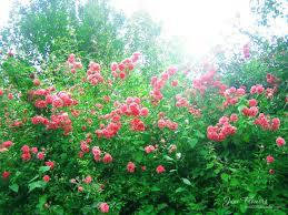 June Flowers - june flowers 14 by love1008 on deviantart