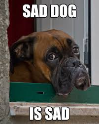 Sad Dog Meme - sad dog is sad misc quickmeme