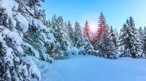 wallpaper pine trees snow winter sunny day hd nature 3866