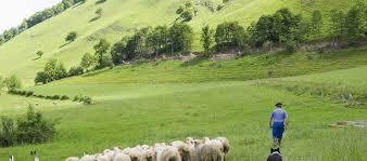 cuisiner l agneau il faut prendre le temps de cuisiner l agneau de lait c est une