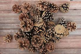 100 Pine Cone Christmas Trees For Sale Table Top White