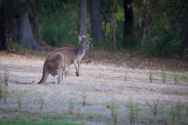 kangaroo lodge rural holiday house yallingup private properties