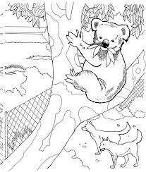 koala bear zoo coloring color luna