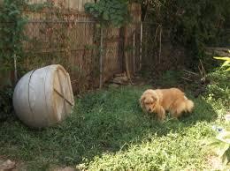 Igloo Dog House Huey Chainofhope U0027s Blog