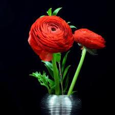 Discount Flowers Bulk Discount Flowers Red Ranunculus