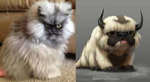 Colonel Meow Memes - i bring you colonel meow funny