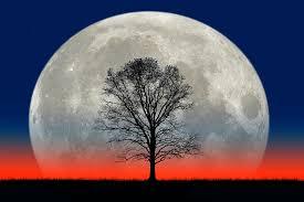 titanic moon and tree photograph by larry landolfi