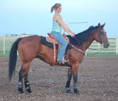 Horse Trailers For Rent In San Antonio Texas Barrel Horses Under 10 000