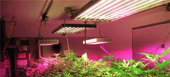 best light to grow pot flowering cannabis videos week by week the weed scene