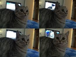 Shock Meme - create meme cat in shock meme the cat in shock cats when