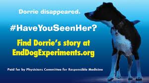 cinema ads confront wayne state over experiments on dog named