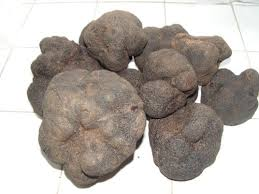 italian truffles fresh italian truffles the mediterranean direct