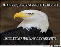 Freedom Eagle Meme - funny bald eagle memes bald best of the funny meme