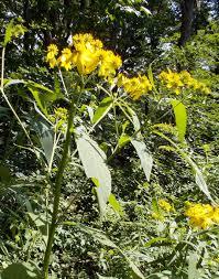 native border plants native plants at the brooklyn botanic garden naturesurrounds
