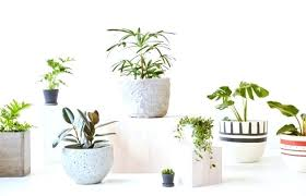 small low light plants small indoor plants popular plant house plants awesome bamboo indoor