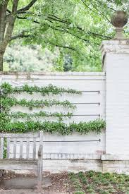 homelife 10 best plants for vertical gardens 42 best garden domain images on pinterest landscaping ideas