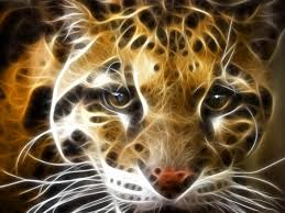 3d Wall Paper by Tiger Wallpaper