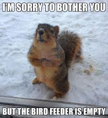 Memes About Being Sorry - squirrel meme