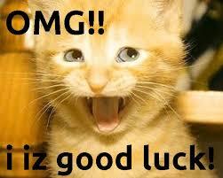Good Luck Cat Meme - good luck cat cats cats cats pinterest cat hacks cat and