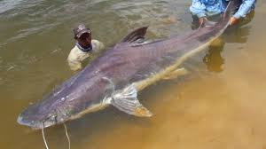 top 5 amazon river monsters youtube