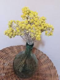 immortelle d italie cuisine immortelles jaunes du var fleurs séchées le var