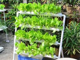 nft hydroponic system nutrient film technique the grow hub
