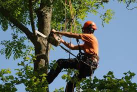 about sid valley tree surgery tree surgeons based in sidmouth