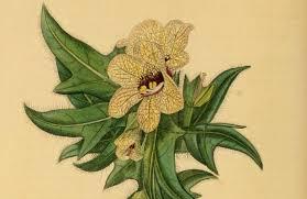 the hidden memories of plants atlas obscura