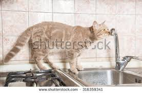 Cat Under Faucet Funny Ginger Cat Drinking Water Kitchen Stock Photo 396401392