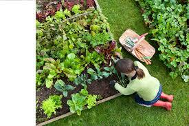 Small Kitchen Garden Ideas A Colorful Landscape Design Idea For Sidewalk Planting Landscaping