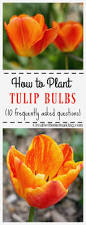 bulb garden layout garden design garden design with the life of a tulip bulb with