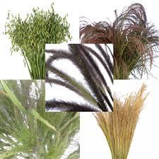 ornamental grass medley fresh cut greenery