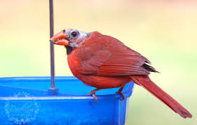 birds gone bald dwellings the heart of your home