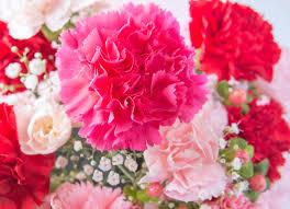 The Language Of Flowers The Language Of Flowers Verdissimo