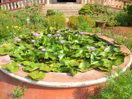 non native plants non native invasive freshwater plants in india fragrant water