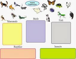 vertebrates worksheet worksheets