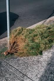 drop off your kansas city metro christmas trees here