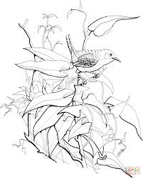 wren coloring pages free coloring pages