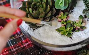 diy holiday succulent terrarium from juicykits com rooted in moss